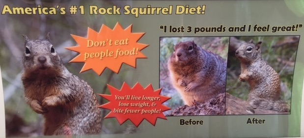 Rock_Squirrel_Diet