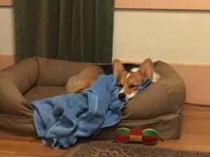 sleepdog