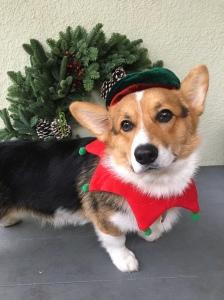 ChristmasTeddy.2017